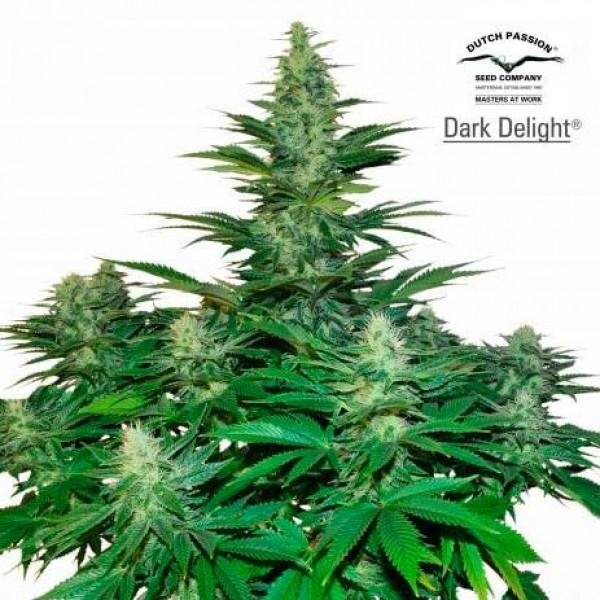 Dark Delight - Dutch Passion