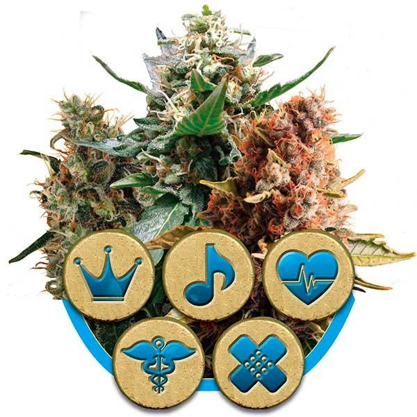 Medical Mix - Royal Queen