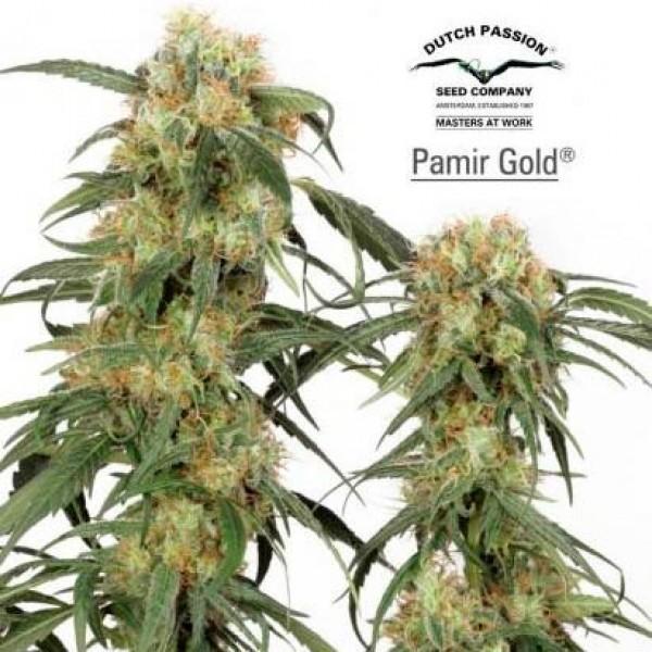 PAMIR GOLD - Dutch Passion