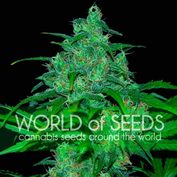 Wild Thailand - World of Seeds
