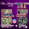 NEW STRAINS PACK INDICA - GOLOSA + ELEVEN ROSES