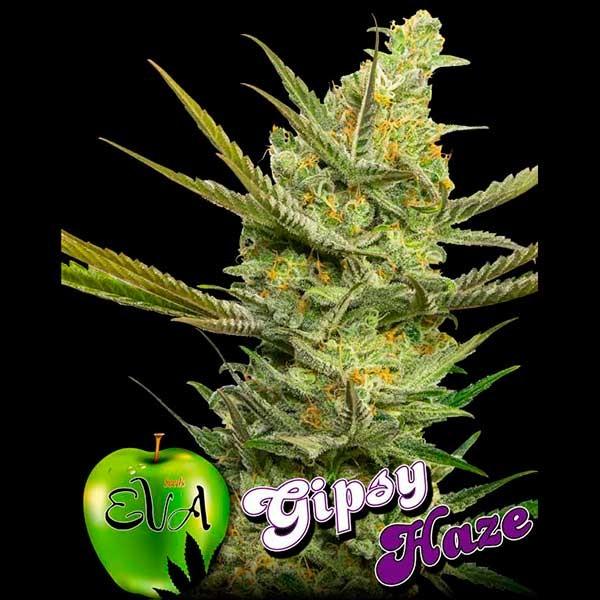 GIPSY HAZE - Eva Seeds