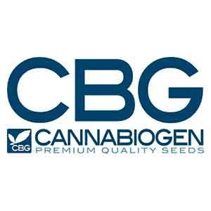 LesHaze Regular - 10 seeds - Cannabiogen