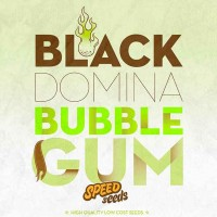 Comprar BLACK DOMINA X BUBBLE GUM