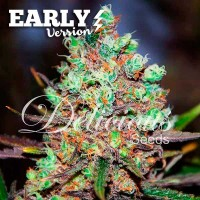 Comprar COTTON CANDY KUSH EARLY VERSION