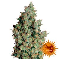 Comprar TANGERINE DREAM