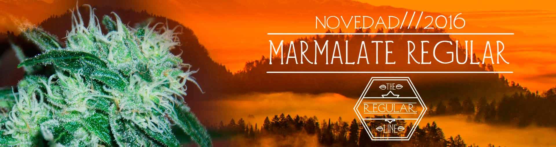 Marmalate Regular