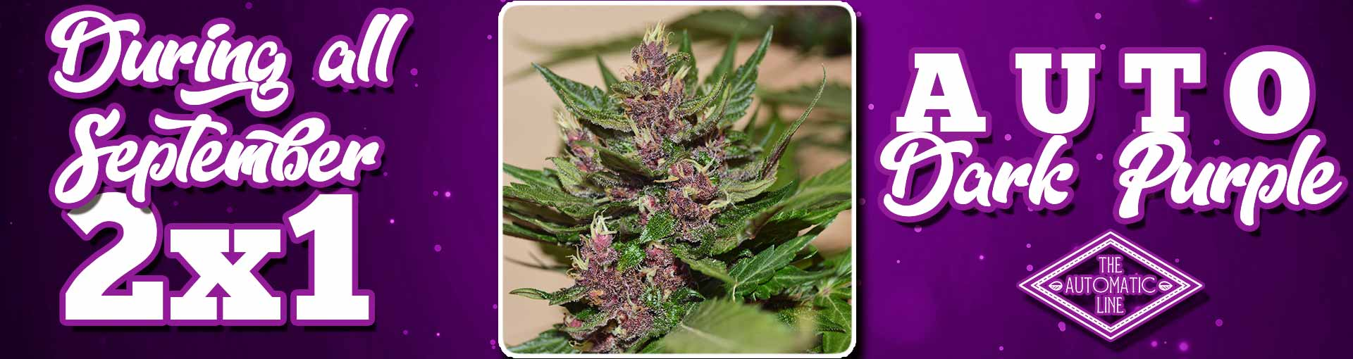 AUTO DARK PURPLE