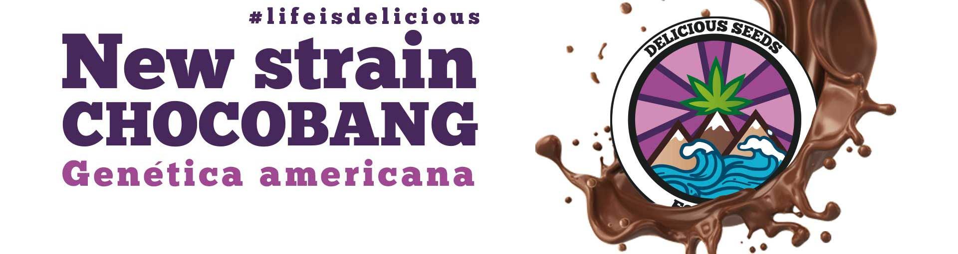 New Strain Chocobang