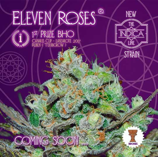 ELEVEN ROSES - NEW STRAIN 2017 - COMING SOON