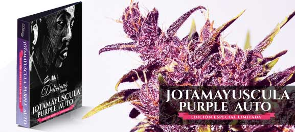JotaMayuscula Purple Auto